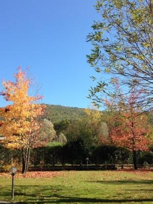 autunno 3.jpg